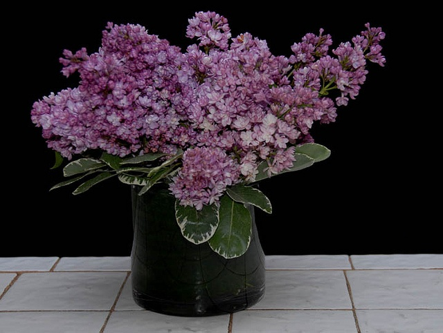 Lilacs,  From Rittners Floral School, Boston, Ma. www.floralschool.com