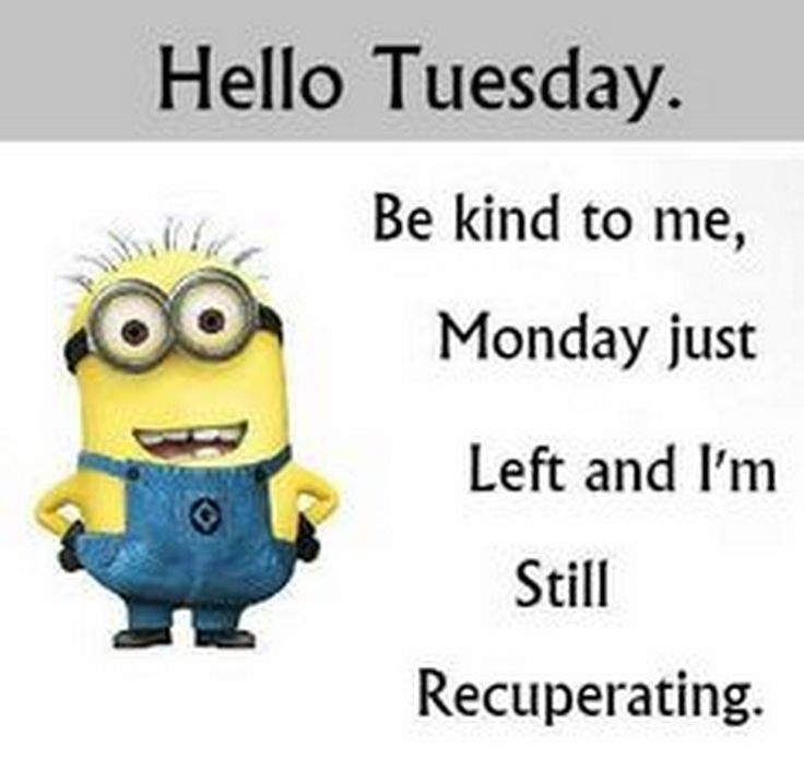 Funny Minion Quotes Tuesday: Best 25+ Cute Minions Ideas On Pinterest