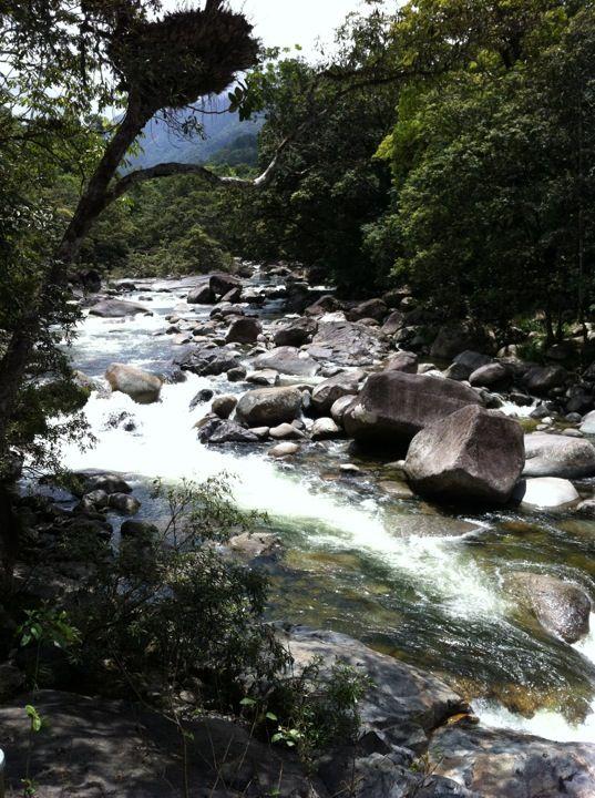 Mossman Gorge in Mossman Gorge, QLD
