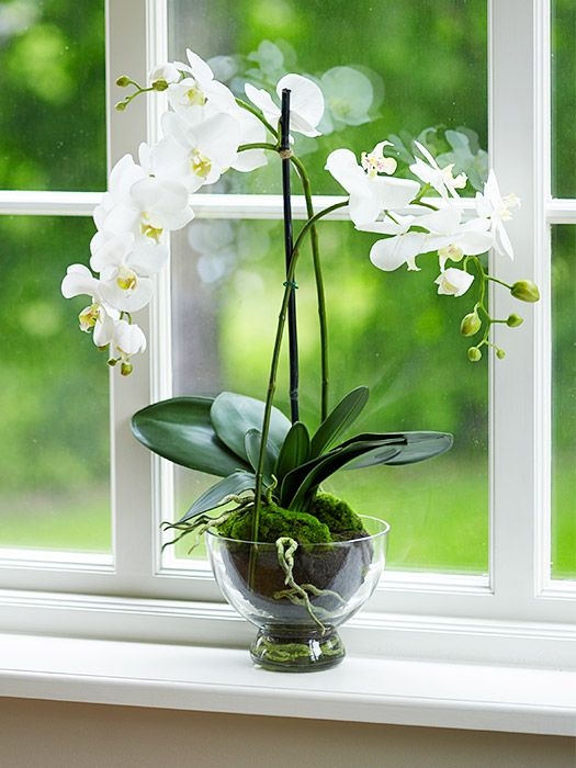 "Phalaenopsis orchid ""Believe it or not, these orchids don't mind being neglected a little,"" says Vass, making them perfect for some extra ambiance in the entryway without any extra maintenance. The fragrant beauties can bloom for up to three months at a time."