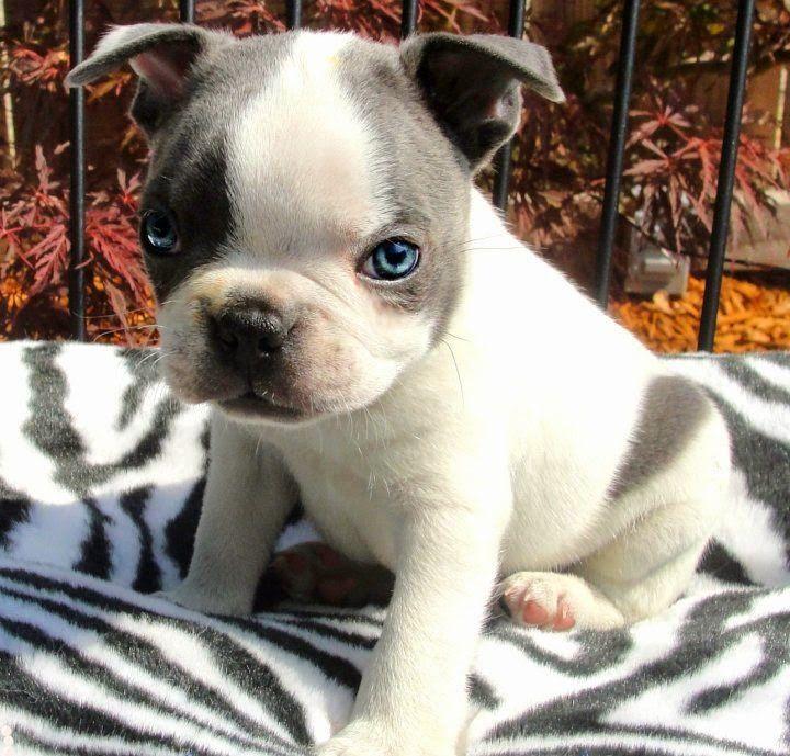 The Best Smallest Dog Breeds Ideas On Pinterest Smallest Dog - 29 cutest dog photos existence