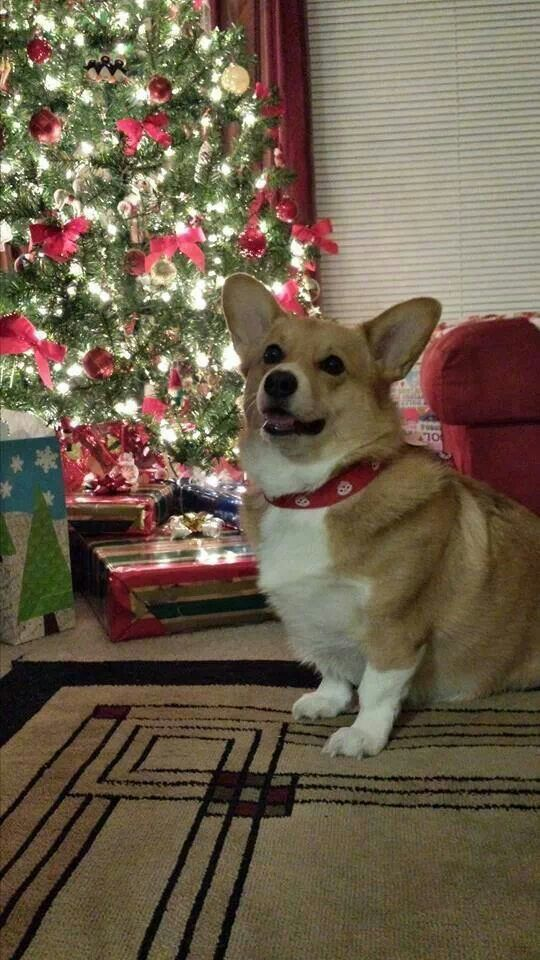 Hurry Santa! Hurry FAST!!! I need to open these presents- some smell pretty good!
