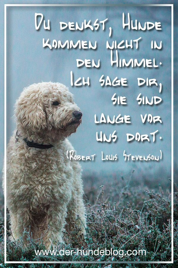 besinnliche sprüche Coole, schöne, besinnliche Sprüche und Zitate über Hunde findet  besinnliche sprüche