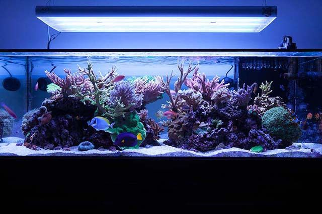 Michael Panganiban's (solitude127) 150 US-gallon SPS dominated reef aquarium
