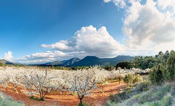 Ruta por el valle del Jerte: más allá del cerezo en flor