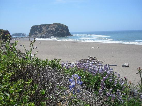 Goat Rock, Sonoma County, CA