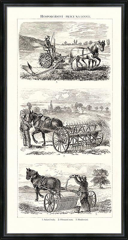 Koně zapřažené do strojů na hospodaření na louce