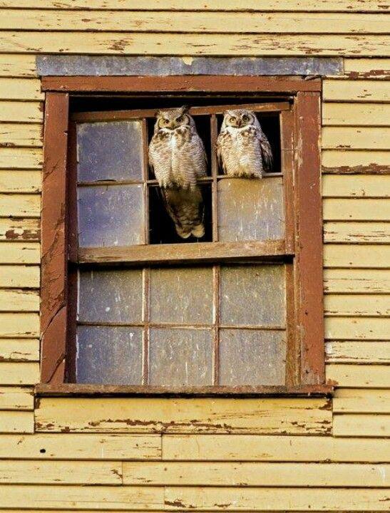 Pair of Owls keeping watch