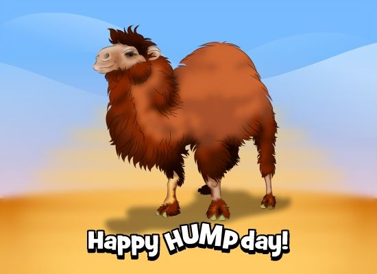 Download Happy hump day pictures.