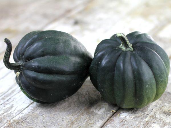 80 Days C Pepo Dark Green Acorn Type Squash Iowa Seed Co