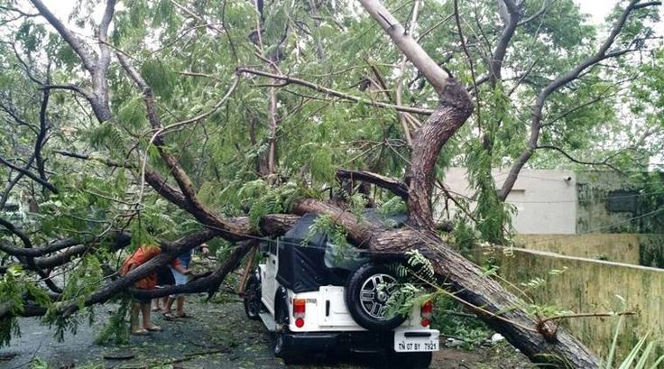 An uprooted tree from Besant Nagar (Photo byCharles Fernandes) The severe cyclonic storm Vardah has madelandfall in Chennai. Heavy rainfall coupled withhigh-velocitywinds have uprooted hundreds of trees in Tamil Nadu. Andhra Pradesh is also on high alert as it is expected to be hit by the cyc...