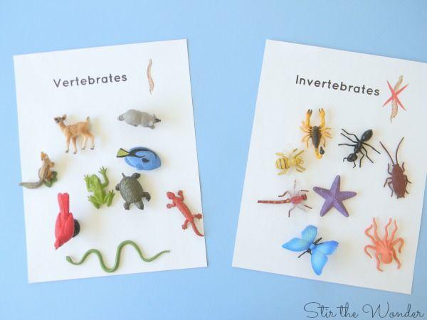 Vertebrates And Invertebrates on Vertebrates Vs Invertebrates Picture Sorting Cards Montessori Printables