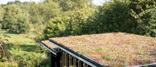 Grønne tage i Storkøbenhavn, på Sjælland eller Fyn | Tagterrasser