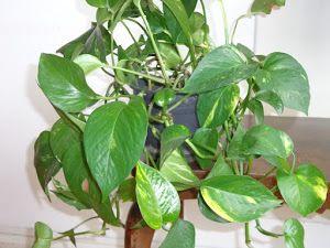 N.... Recuperar las plantas tras las vacaciones | Plantas
