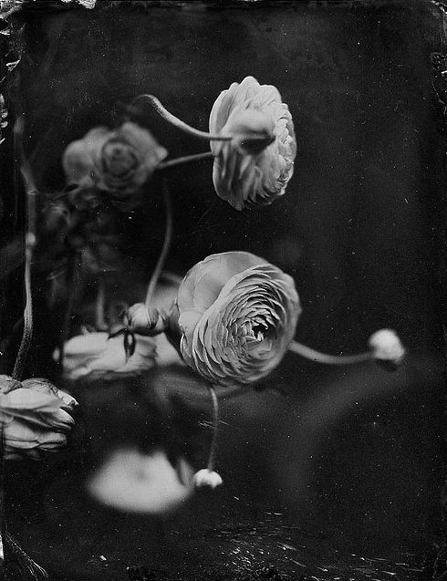: White Flowers, Secret Gardens, Floral Photography, White Photography, Colors Rose, Black White, Bw Photography, Photographers Inspiration, Kristen Hatgi