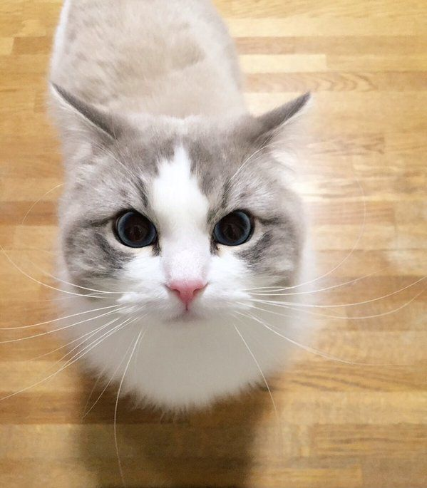 うがいに驚く猫