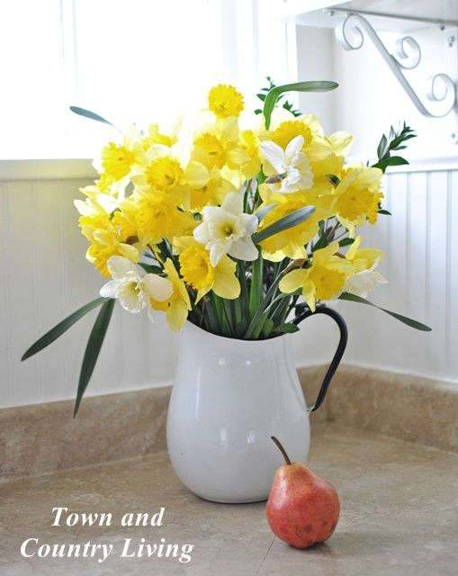 Dafodils in a white vase with pear