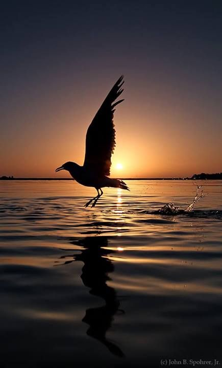 Sunrise Apalachicola, Fl. | ST. GEORGE ISLAND ...