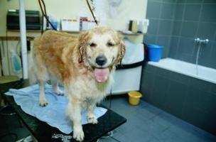 Soluções orgânicas e remédios naturais para combater a coceira em cachorros