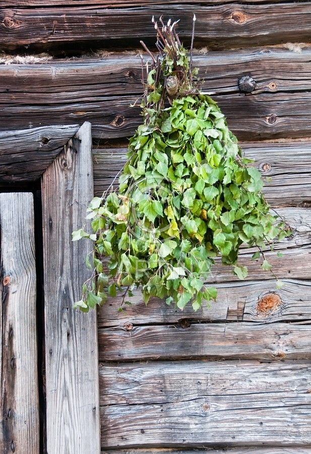 A traditional Finnish way to improve your health! Go into sauna, beat yourself with birch leaves! The leaves are used as diuretic and can detoxify our bodies. They are known to treat ulcers. They are full of saponin, mucilage, procatechinic tannin, essential oil, betulin, saccharose, resins. Due to all these components birch has also anti-rheumatic properties.