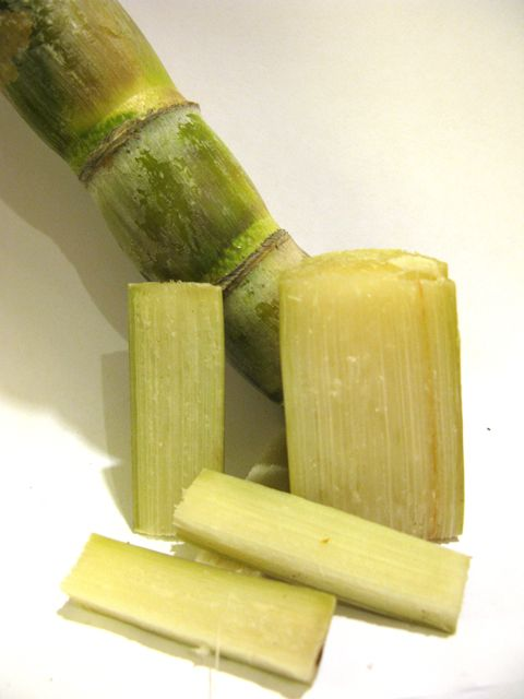 sugar cane - chew it for the juice, then spit out the spent fibers.......My Dad grew this for a living, he made syrup, I've chewed so much of this!