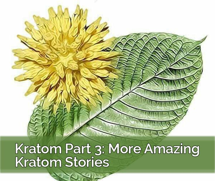 Since the release of our first episode about Kratom, we've had a flood of comments from users telling us how much Kratom has changed their lives. It's nothing short of shocking and amazing to hear how so many people were lifted from such dark places thanks...