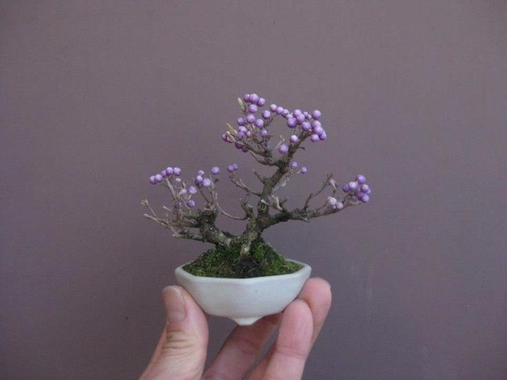 Mame (miniature) Bonsai                                                       …
