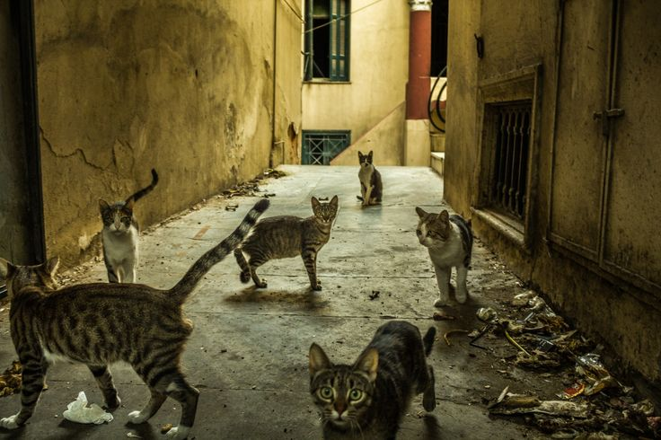 Inner city/Gangs of Athens by Vagelis Poulis on 500px