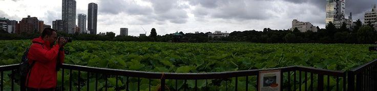 Ueno lake - Japan