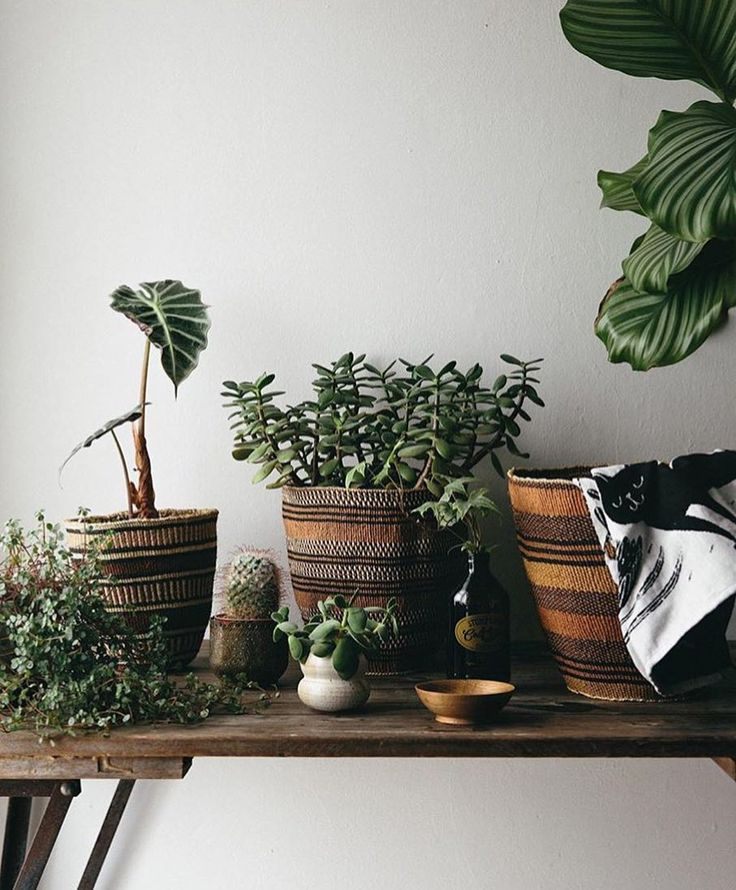 instagram plantas pinterest nidos boho y