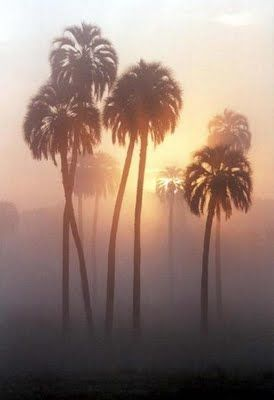 : Palms Tre Paradis, California Palms Trees, California Homes, Trees On, California Dream, Mystic Mists, Will, Place, Forrest Palms