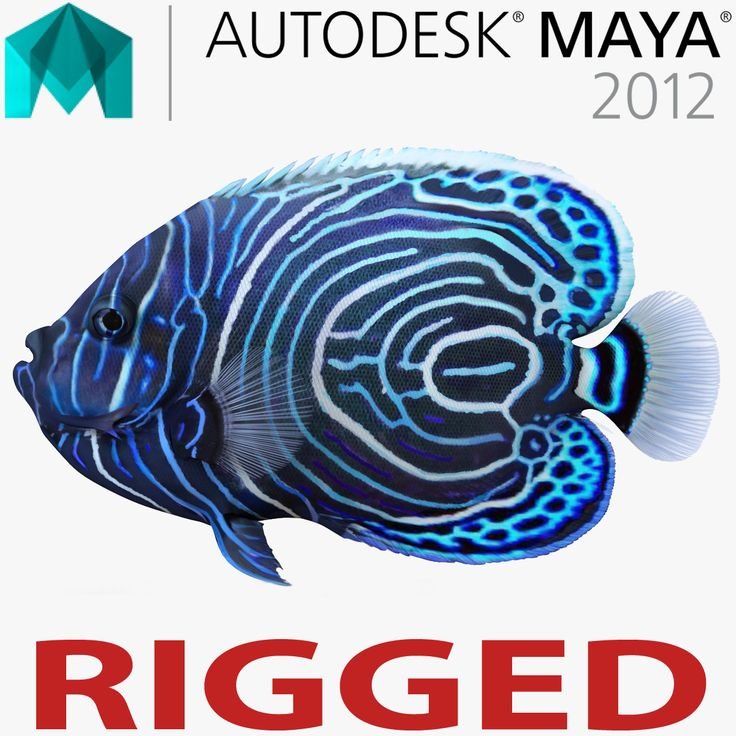 Juvenile Emperor Angelfish Rigged for Maya