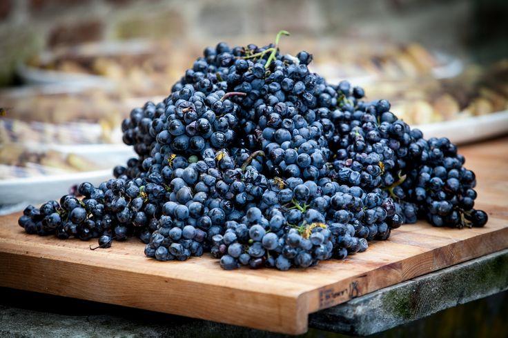 italian fall country#grape#bee#anna bussolotto# food