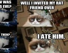 Funny Kitty Cat New Year - Bing images   Grumpy cat ...