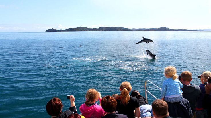 Bay of Islands: Dolphins/Whales/Sharks. North Island. New Zealand