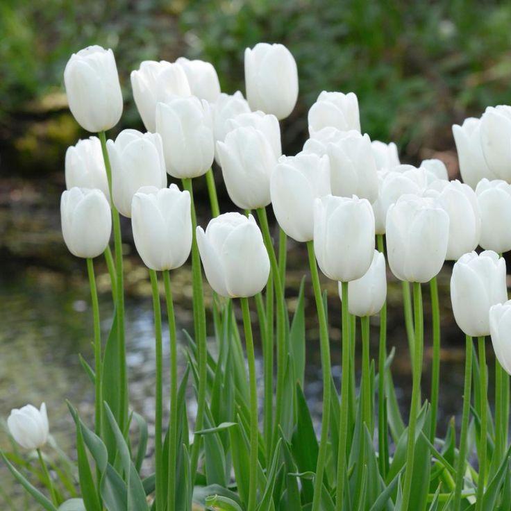 379 best Weißer Garten - Mein grün-weißer Traum images on Pinterest ...