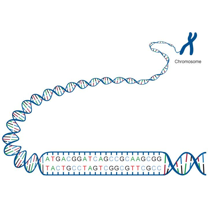 GeneEd: excellent site about genetics, from cell biology to evolution to biotech