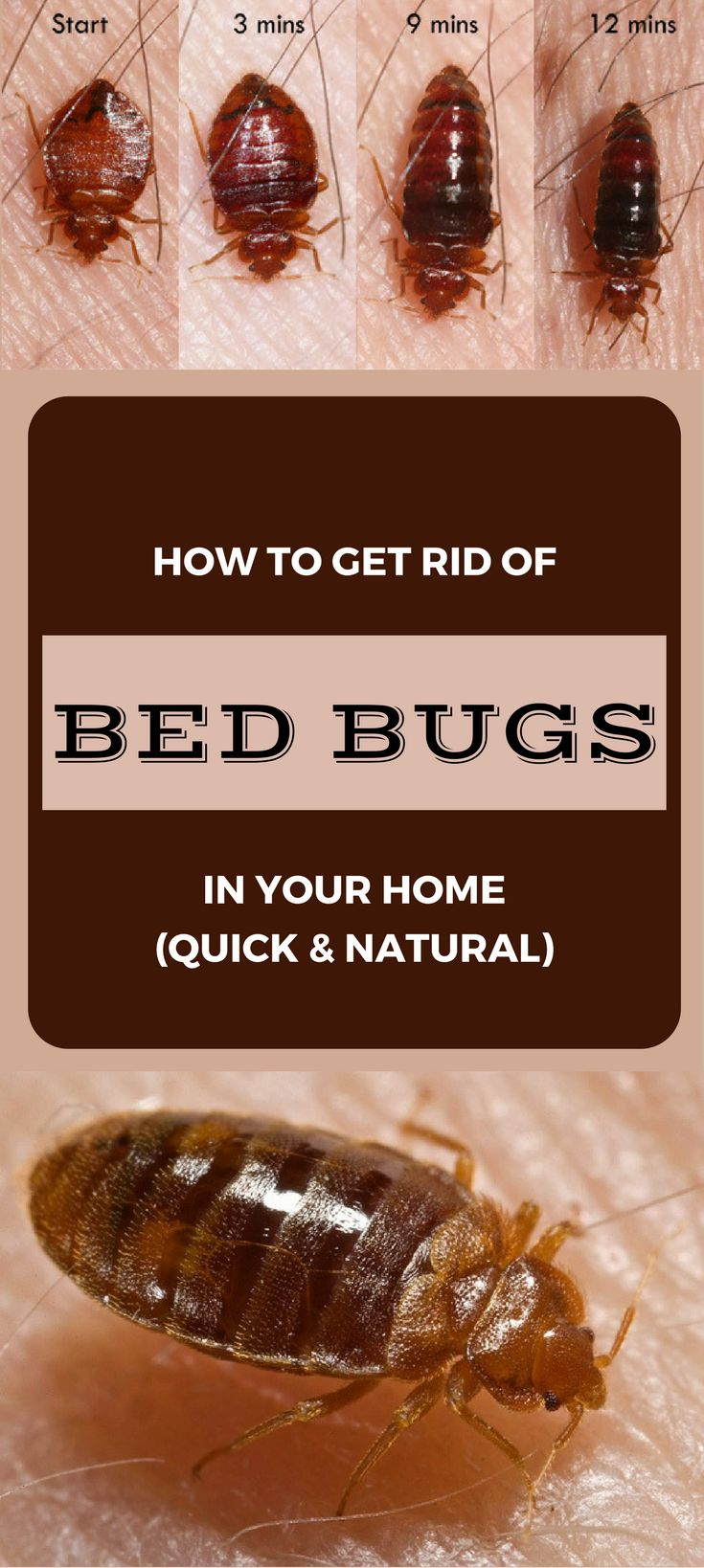 How To Get Rid Of Bed Bugs In Your Home Quick And Natural