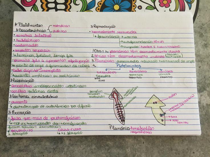 ✨Tema: estudo dos filos. ✨Porífero -Cnidário -Platelmintos-Nematelmintos-Moluscos-Anelídeos-Artrópodes -Equinodermos-Cordados✨