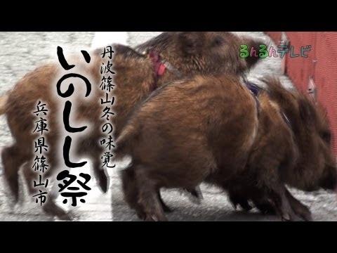 丹波篠山冬の味覚 いのしし祭(兵庫県・篠山市)#sasayama