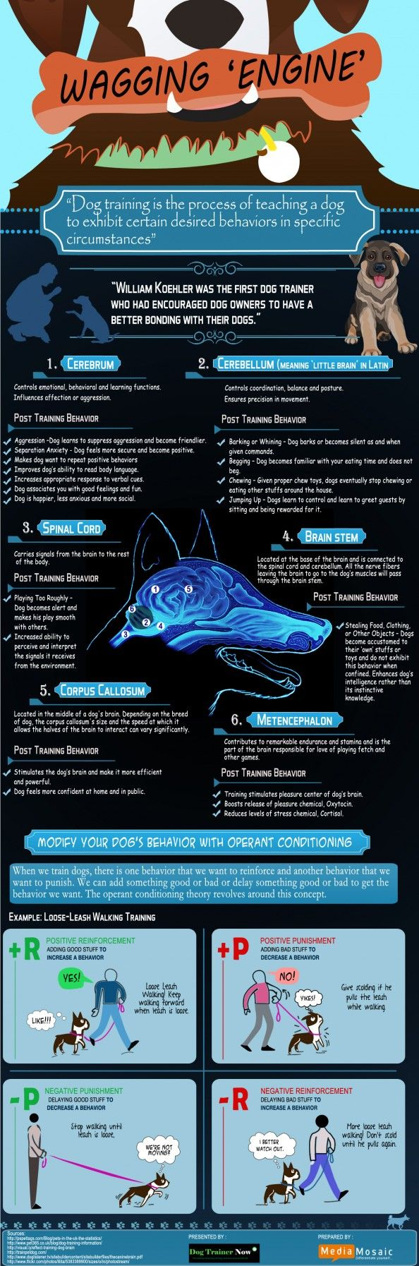 111 best pet facts infographics images on pinterest