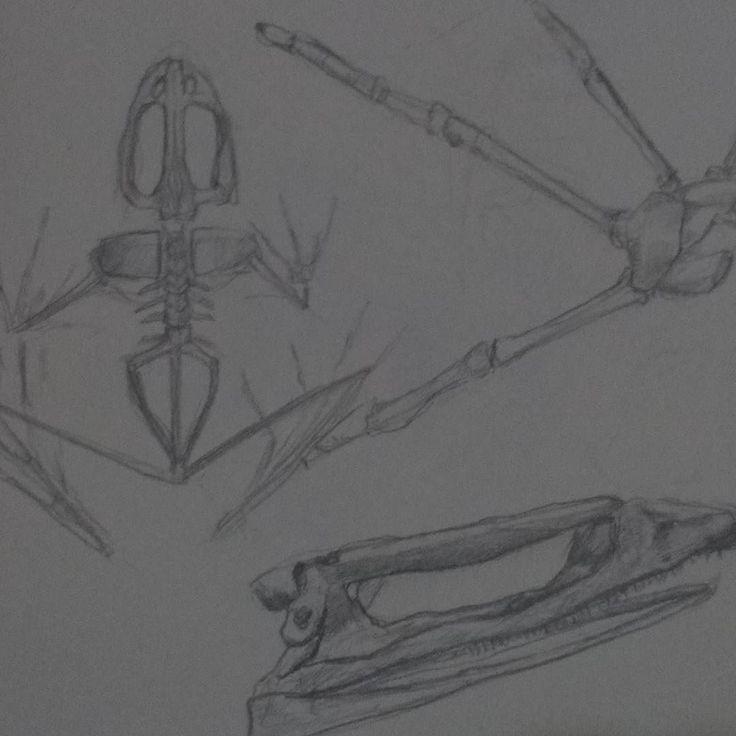 Pequeno estudo de esqueleto das rãs. . . . . . . . #art #illustration #ink #inkdrawing #drawing #draw #picture #photography #artist #sketch #sketchbook #paper #pen #pencil #artsy #instaart #rascunho #instagood #desenho #arte #rascunho #gallery #masterpiece #creative #photooftheday #instaartist #graphic #graphics #artoftheday