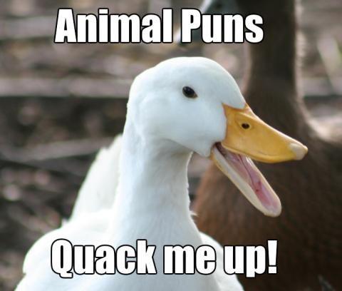 Animal Puns | Pun Jokes …
