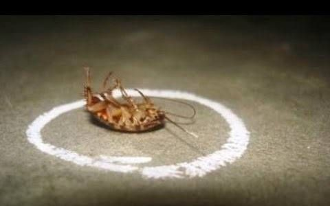 How to Get Rid of Roaches Permanently From Your Home