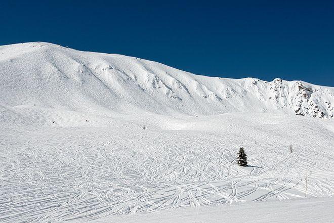 The Whitehorns at Lake Louise Ski Area // by Neil Millar, Lake Louise, AB