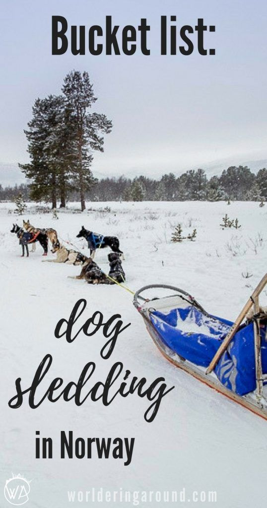 Bucket list activity: Dog sledding in Norway - where to go dog sledding to have a happy Husky safari? Norway winter travel, things to do in Norway, Norway bucket list   Worldering around #Norway #huskysafari #dogsledding
