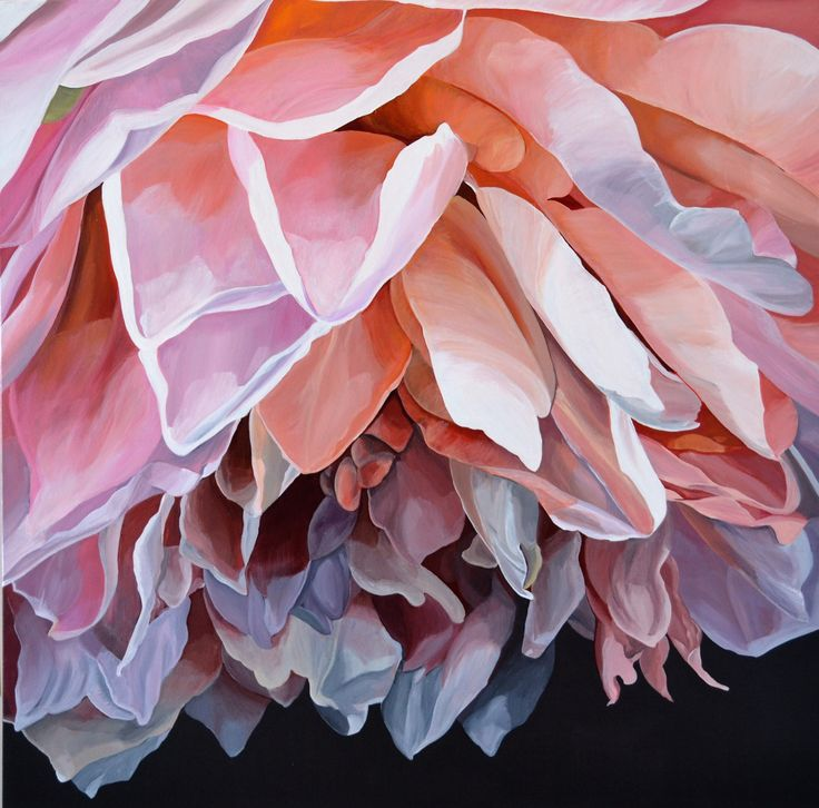 'Flirt' A gorgeous rose. 76 x 76 cm Jenny Fusca Paintings