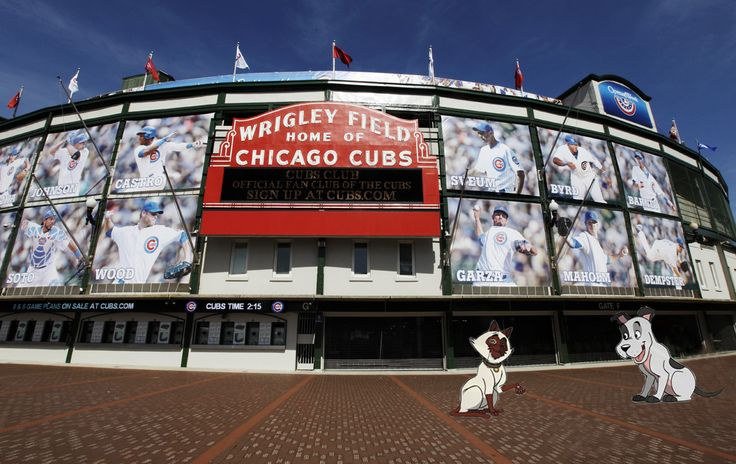 Share this photo if you would be rooting for the Cubs tonight! #Chicago #cubs