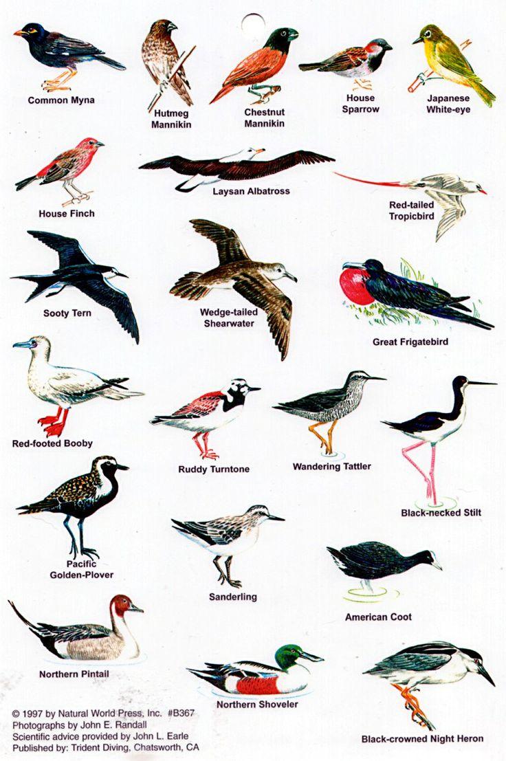 Birds Of Hawaii