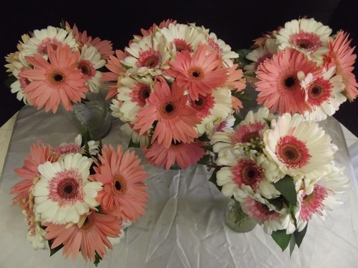 Daisies For Wedding White And Coral